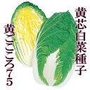 【郵便送料無料】黄ごころ75 20ml 【野菜種子】 【タキイ種苗】【黄芯白菜の種】