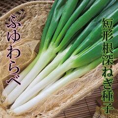 ねぎ ふゆわらべ 8ml 小袋種子 【郵便送料110円~】【タキイ種苗】【野菜種子】