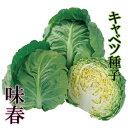 味春 キャベツ種子 1.4ml 極早生種 良質系【野菜種子】 【タキイ種苗】【極早生キャベツ】【キャ