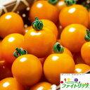 【郵便送料無料】オレンジ千果ミニトマト1000粒【トマト種】【タキイのタネ】【野菜の種】【機能性野菜】【ファイトリッチシリーズ】
