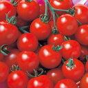 【郵便送料無料】CFココミニトマト1000粒【トマト種】【タキイのタネ】【野菜の種】
