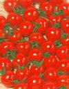 【郵便送料無料】キャロル10ミニトマト1000粒【トマト種】【タキイのタネ】【野菜の種】