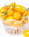 【郵便送料無料】イエローアイコミニトマト1000粒【トマト種】【タキイのタネ】【野菜の種】