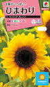 花種 NL300 ひまわり F1 サンリッチ オレンジ 小袋 [FHM512]【花の種】【タキイのタネ】【送料110円?】【ガーデニング】