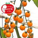 マロウの地中海トマトプチポンカナリア超ミニトマト種子100粒【イタリアトマト】【野菜の種】【郵便利用で送料無料】
