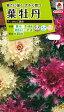 花種 NL200 葉牡丹 F1 さんご混合 小袋 [FHB619]【花の種】【タキイのタネ】【送料110円〜】【ガーデニング】