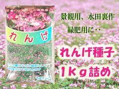 【送料無料】人気の観葉植物モンステラ