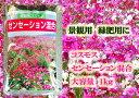 【送料込】景観用コスモス センセーション混合 1kg【花の種】【緑化事業】