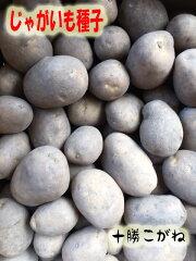 【種芋】男爵じゃがいも種1kg【検品合格済】
