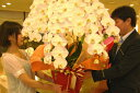胡蝶蘭5本立ち・胡蝶蘭(コチョウラン)胡蝶蘭大輪5本立ち【送料無料】胡蝶蘭 お祝い・胡蝶蘭・開店祝い・・胡蝶蘭・胡蝶蘭 大輪・胡蝶蘭 開店祝い【ラン・胡蝶蘭】シンポジウム 周年記念式典  竣工式落成式 お歳暮株主総会はなやか正月