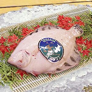 煮魚にすると最高の黒カレイ!!淡泊で食べやすい。【オホーツク産】 黒カレイ 【1尾約500g 2...