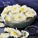 黄山貢菊 20g 美麗花茶 栽培期間中農薬不使用 干し菊の花 蕾 ブレンド茶 薬膳食材