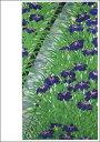 ポストカード 【アート】福田平八郎「花菖蒲(ハナショウブ)」【148×105mm】(VD4382)