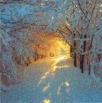 グリーティングカード 【クリスマス】雪に覆われた森の中の日の出【封筒付き/白】【封筒サイズ163×163mm】【中面/「MERRY CHRISTMAS ANDA HAPPY NEW TEAR」の文字あり】【キラキラのフリッター加工あり】(XLDC0027)