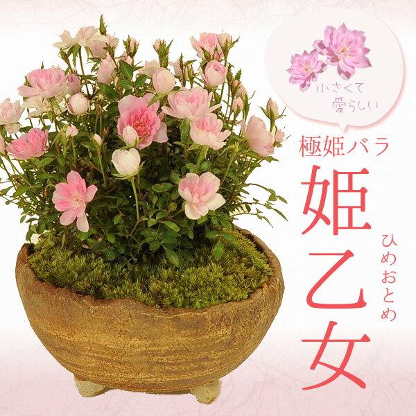 花・観葉植物