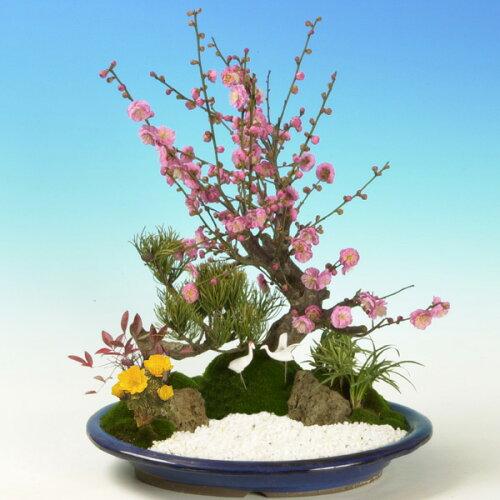 迎春:松竹梅(楕円浅鉢)*