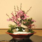 迎春:松竹梅(変形赤釉薬鉢)*【楽ギフ_包装】【楽ギフ_メッセ入力】