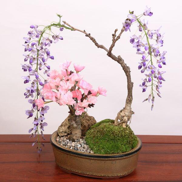 人気花物盆栽:桜・藤寄せ