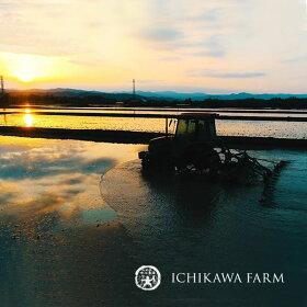 市川農場の「ゆめぴりか」10kg