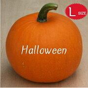 【ハロウィン】生かぼちゃLサイズカボチャ本物自農場産ハロウィーン種
