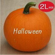 【ハロウィン】生かぼちゃ2Lサイズカボチャ本物自農場産ハロウィーン種