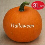 【ハロウィン】生かぼちゃ3Lサイズカボチャ本物自農場産ハロウィーン種