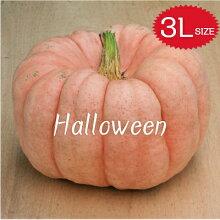 【ハロウィン】生かぼちゃ3Lサイズカボチャ本物自農場産ポーセリンドール種