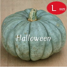 【ハロウィン】生かぼちゃLサイズカボチャ本物自農場産