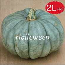【ハロウィン】生かぼちゃカボチャ本物自農場産