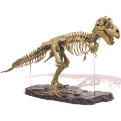 1/10モデル恐竜骨格キット「ティラノサウルス」[代引き手数料無料][送料無料]
