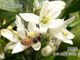 生はちみつ 非加熱 みかん蜂蜜200g みかんの郷のはちみつ【ネコポス送料無料】【国産】【smtb-kd】