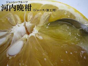 【送料無料】訳あり/ジュース用河内晩柑(格外・加工用)約10kg【smtb-kd】