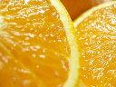 爽やかな甘味と酸味が楽しめる柑橘【愛媛県産】訳あり清見タンゴール量り売り1kg〜