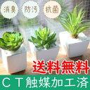 CT触媒フェイクグリーン3個セット【消臭/多肉植物/観葉植物/フラワー...