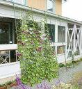 つる性植物のカーテンで気温の上昇を抑えます緑のカーテン 3m伸縮ワイド1800