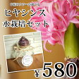 【数量限定商品】お花の色が選べる! ヒヤシンスポット&ヒヤシンス球根水栽培セット