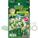 早咲き香り水仙 タキイ種苗 GPNコレクション 「日本すいせん」 3球 花色:白に黄色カップ