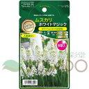 タキイ種苗 GPNコレクション ムスカリ 「ホワイトマジック」 8球 花色:白