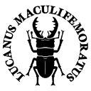 【ミヤマクワガタ Ver.035 カッティングステッカー ミニサイズ 3枚組 幅約11.5cm×高約10.8cm】LUCANUS MACULIFEMORATUS ハンドメイド