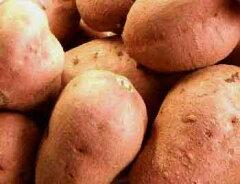 種子島産・粒揃いの極上品です。 有機栽培 安納芋3kg