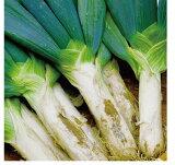 加熱時のとろけるような食感と甘さが特徴です。無農薬・無化成肥料群馬県産下仁田ねぎ300g×2個
