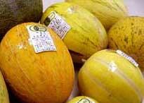 ●8月下旬ごろ発送予定有機JAS・完全無農薬栽培トルクメニスタン瓜いろいろ詰め合わせ5kg