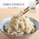 茨城県産 特別栽培玄米「コシヒカリ」(2kg)