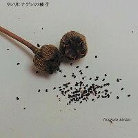 [山野草種子]リシリヒナゲシ50粒