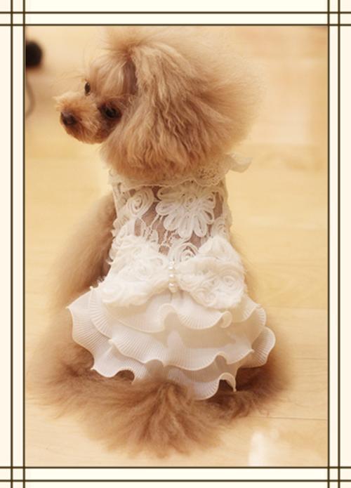 【在庫のみ】高級感があり、大人っぽいデザイン☆総レースドレス★【セール】【トイプードル】【パピヨン】【チワワ】【ヨーキー】【春夏新作】【犬ウェア】【犬 服】【可愛い】10P03Sep16 高級感があり、大人っぽいデザイン☆総レースドレス・ワンピ♪全体に描かれているかわいいキャミタイプのドレス♪結婚式やイベントに重宝する逸品です♪