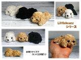 LittleBeans 犬(プードル)