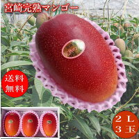 宮崎県産完熟ミニマンゴーちいさいけどうまい!甘くて濃厚な味わいが絶品!!
