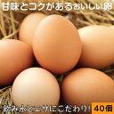 ポイント2倍 財寶温泉 生 卵 40個 (10個×4パック) 送料無料 [濃厚 卵黄 鹿児島県産 たまご 玉子 鶏卵]
