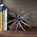 フェイクグリーン 造花 チランジア 観葉植物 エアプランツ [9890...