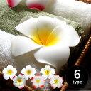 【メール便対応】プルメリア造花[お得なエコノミータイプ] [9466-...